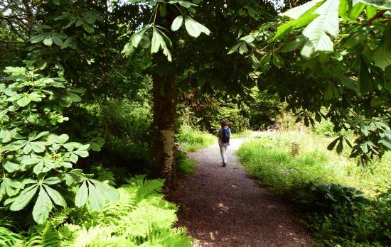 Amroth, UK: Colby Woodland Garden