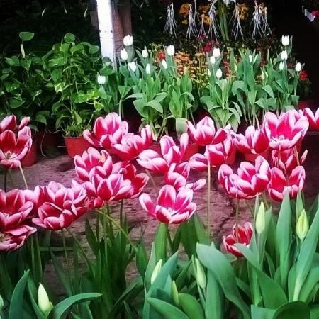 Foto de mercado de las flores de nativitas ciudad de for Plantas temporada