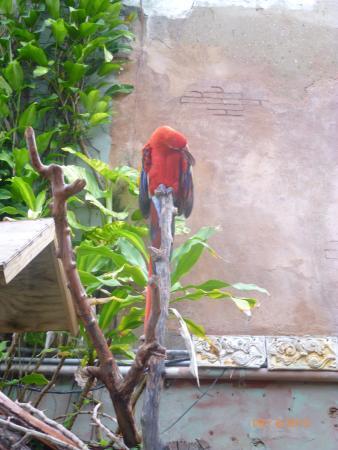 Un papagayo amigo