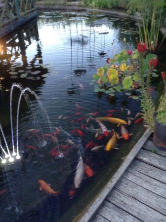 bassin l 39 entr e picture of les jardins d 39 eau carsac. Black Bedroom Furniture Sets. Home Design Ideas