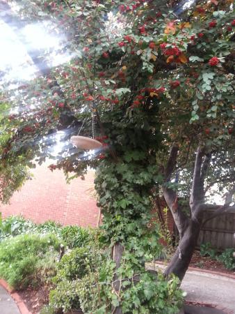 Portarlington, Australia: Seek shade outside while waiting for coffee