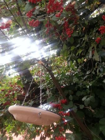 Portarlington, Australia: the outdoor garden sun filtering through