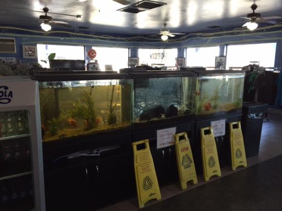High sierra oasis/ route 66: The fish tanks! Fresh seafood??