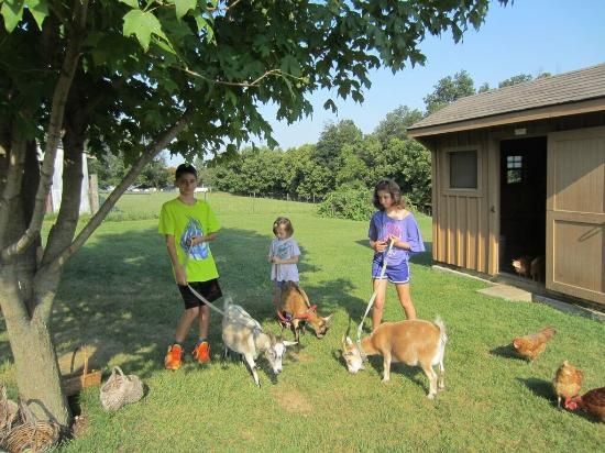 Country Vistas: Children enjoying their time with the farm animals