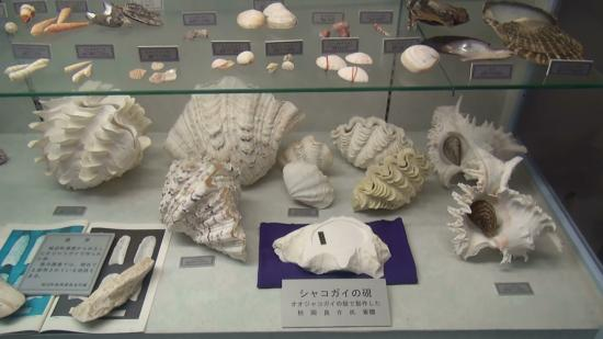 Miyakojima Sea Treasure Museum