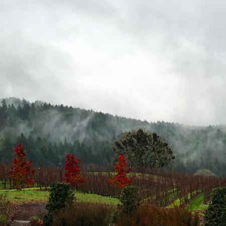 A Great Oregon Wine Tour: photo0.jpg