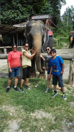 Phang Nga, Thailand: super cool elephant