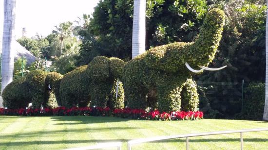 Cuidadisimo jardin setos en forma de elefante picture - Setos de jardin ...