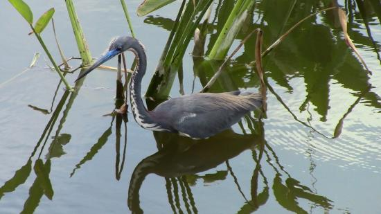Wakodahatchee Wetlands: One of many birds