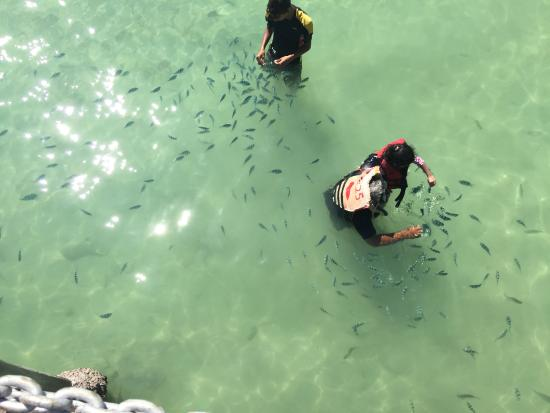 Manukan Island, Malasia: Day trippers feeding fish in the sea