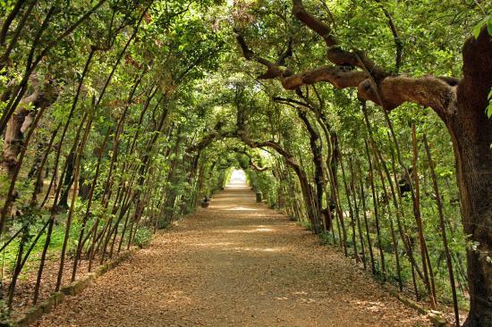 Boboli via ricoperta da siepi picture of giardino di boboli