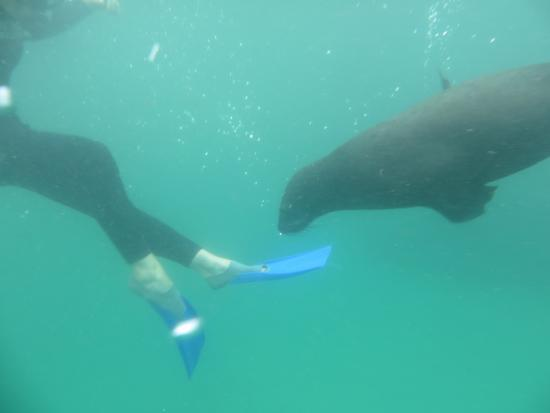 Offshore Adventures: Robben sind so neugierig
