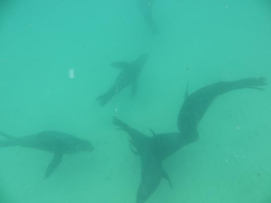 Offshore Adventures: mit Robben schwimmen