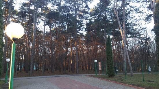 Khmilnyk, ยูเครน: сосны