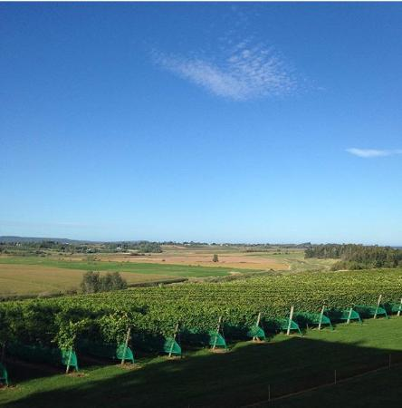 Port Williams, Канада: Great view of the vineyard