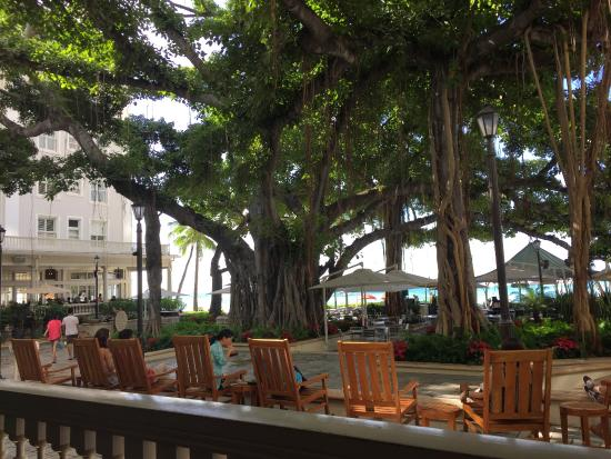 Banyan Tree Courtyard Picture Of