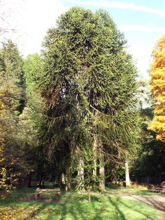 Coleford, UK: Abouretum