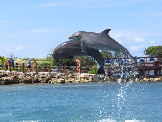 picture of dolphin cove lucea tripadvisor. Black Bedroom Furniture Sets. Home Design Ideas