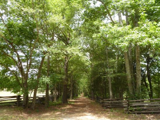 McConnells, Южная Каролина: Summer 2015