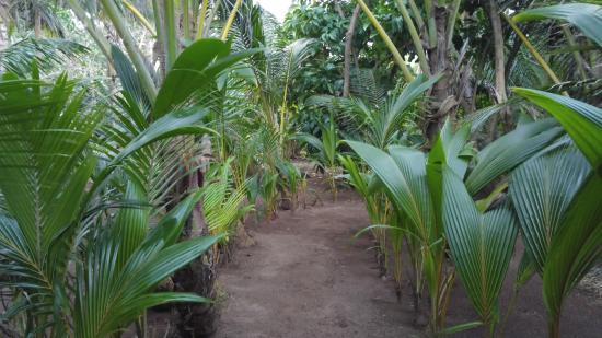 Casa Iguana: One of the green-lined paths through the property
