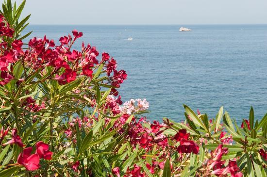 La Rosa dei Venti: Vista mare