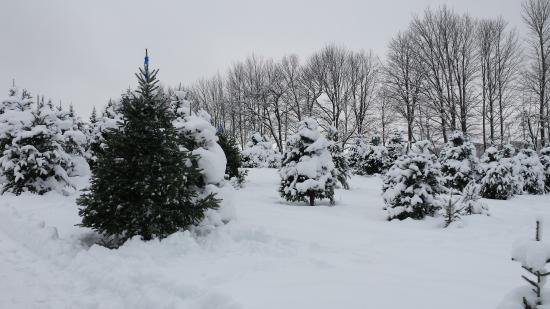 West Glover, VT: The perfect tree.