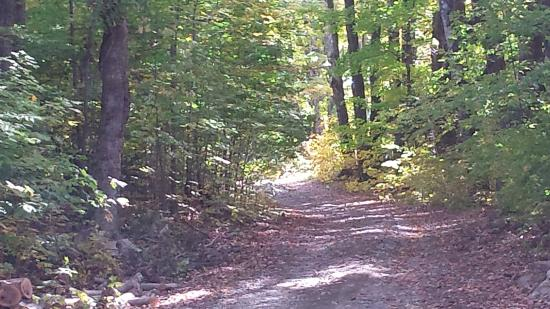 "West Glover, VT: Country walks ""around the block"" 4, 6 or 10 miles from the house (hills are free)"