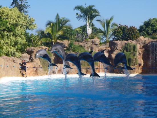 Penguins picture of loro parque puerto de la cruz tripadvisor - Loro parque puerto de la cruz ...