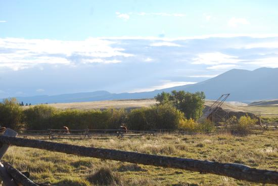 Deer Lodge, MT: Cattle on the southern part of the ranch.