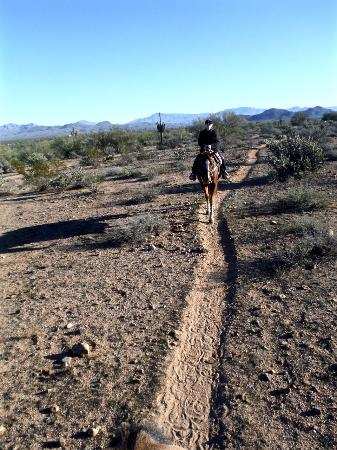 Arizona central, AZ: Desert trail ride with Fort McDowell Adventures