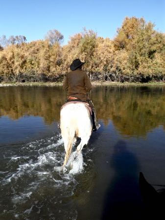 Centraal Arizona, AZ: Crossing the Verde River on desert trail ride with Fort McDowell Adventures