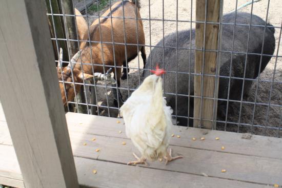 Thibodaux, LA: More animals to feed