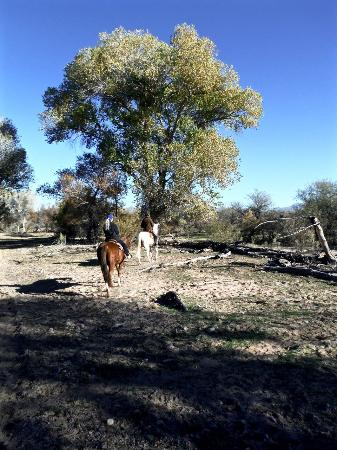Centraal Arizona, AZ: Desert trail ride with Fort McDowell Adventures