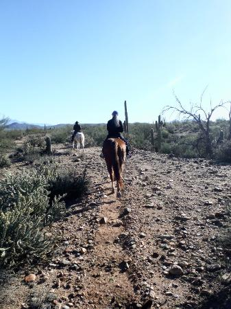 Central Arizona, AZ: Desert trail ride with Fort McDowell Adventures