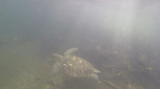 Straddie Adventures: Turtle