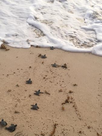 Playa del Secreto, เม็กซิโก: photo2.jpg