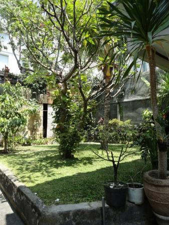 Sayang Maha Mertha: Везде такие мини-садики, зелени везде много, все очень ухожено