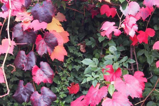 Winter-Rose Cottage B&B: autumn