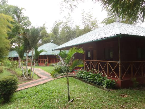 Bamboo Grove: Garden in front of rooms