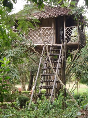 Bamboo Grove: Tree house in the campus