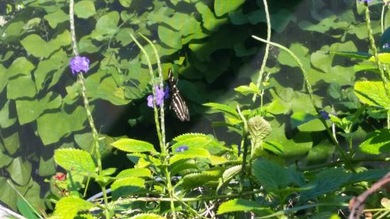 Tom Allen Memorial Butterfly House