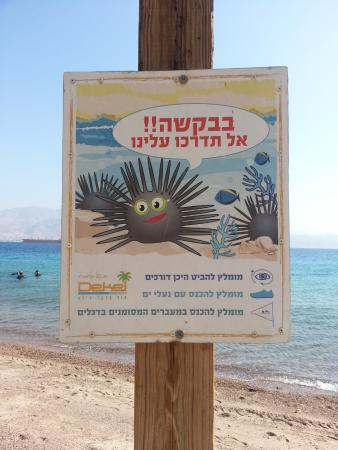 too much seaurchin - Picture of Dekel Beach Eilat, Eilat - TripAdvisor