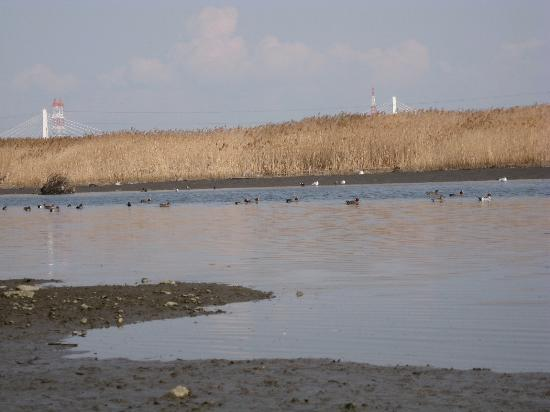 Tama River: 川