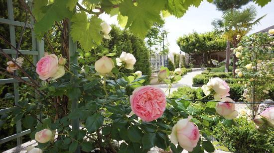 Port Sainte Foy et Ponchapt, ฝรั่งเศส: The Garden