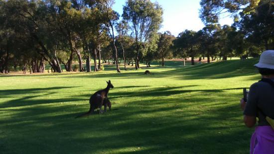 Margaret River Golf Club: DSC_0500_large.jpg