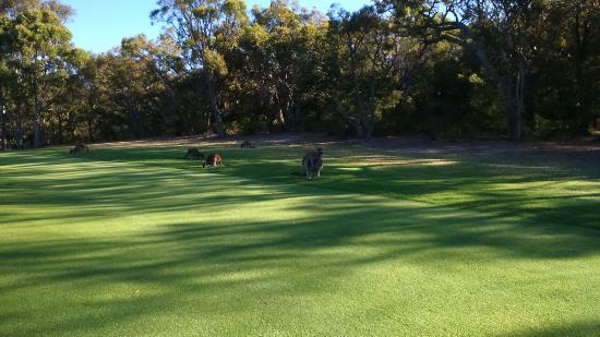 Margaret River Golf Club: DSC_0501_large.jpg