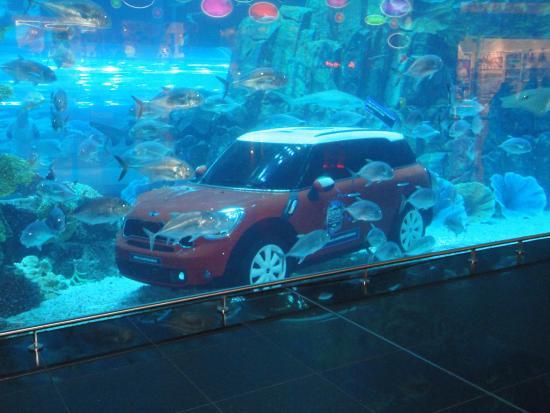 Dubai Aquarium - Picture of Dubai Aquarium & Underwater Zoo, Dubai ...