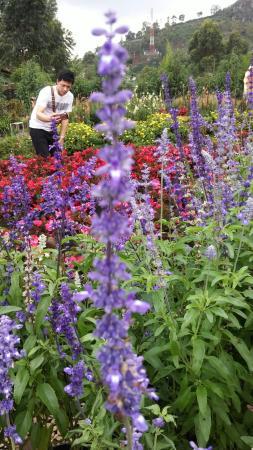 Begonia Garden