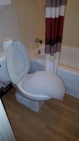 เตรวีโซ, เพนซิลเวเนีย: Guest laundry backing up into the toilet.
