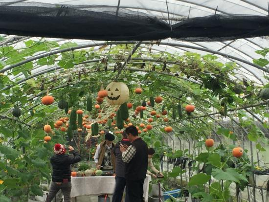 Wang Shan Pumpkin Recreation Farm